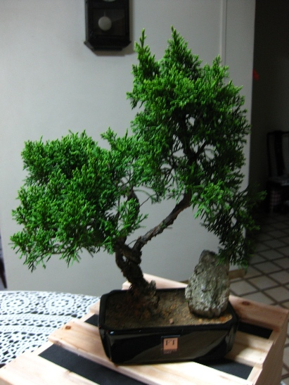 Bonsai from FT